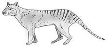 Loup-Tigre de Tasmanie dans TIGRE 220px-Thylacinus_potens