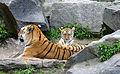 Tiger berlin-4.jpg