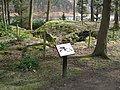 Tin Town - Remains of the Derwent Canteen Wall-lined Beer Cellar - geograph.org.uk - 734534.jpg