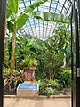 Torre Abbey Palm House - geograph.org.uk - 1450064.jpg