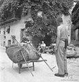 Travo pelje, Staro selo 1951.jpg