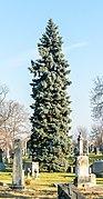 Tree in GWC (25039p).jpg