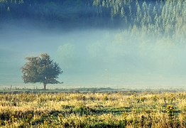 Tree in the mist in Glen Feochan (geograph 3147447).jpg