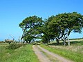 Trees by the Track - geograph.org.uk - 464244.jpg