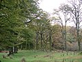 Trees near Auchnagarron, Glendaruel - geograph.org.uk - 1039126.jpg
