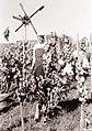 Trgatev v Jeruzalemu 1961.jpg