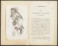 Trichechus rosmarus - 1700-1880 - Print - Iconographia Zoologica - Special Collections University of Amsterdam - UBA01 IZ21100011.tif