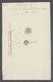 Trichoda fixa - - Print - Iconographia Zoologica - Special Collections University of Amsterdam - UBAINV0274 113 10 0002.tif