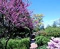 Tudor Place in April (23231967066).jpg