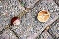 Two, chestnuts.jpg