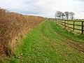 Two Types of Field Boundaries - geograph.org.uk - 323400.jpg
