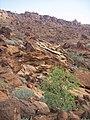 Twyfelfontein 6 (SqueakyMarmot).jpg