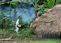 U.S. Navy Hospital Corpsman 1st Class Van Manlambus sprays insecticide around a hut May 6, 2011, in Espiritu Santo, Vanuatu, to control the mosquito population and prevent the spread of malaria 110506-N-ZZ999-066.jpg
