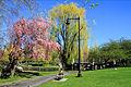 USA-Boston Public Garden0.jpg