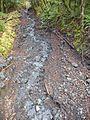 Un riachuelo fluye en el medio de bosque - panoramio.jpg