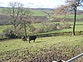 Upper Browney valley - geograph.org.uk - 357723.jpg