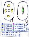 Urtica dioica floral diagram.jpg