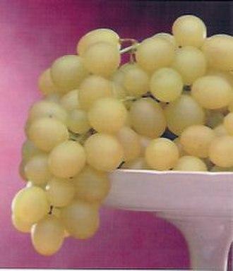 Italia (grape) - Italia Grape