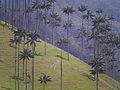 Valle Cocora, Kolumbien (13158608725).jpg