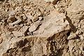 Velykyi-Hlybochok-vidslonennia-sarmatu-14090836.jpg