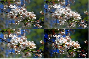 Photographic filter - The bottom left image has a diffusion filter applied to the original image (shown in the top left). The top right is a cross screen effect.