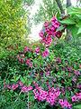 Verge flowers 9a.JPG