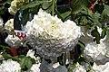 Viburnum opulus Roseum 6zz.jpg