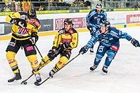 Vienna Capitals vs Fehervar AV19 -97.jpg