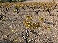 Vino-cyprus hg.jpg