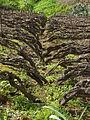 Viticultura 0048.jpg