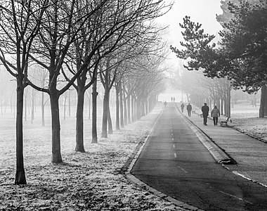 Hoar frost on a foggy morning at Olarizu Park. Vitoria-Gasteiz, Basque Country, Spain