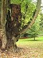 Von Halfern Park Aachen - 9.jpg