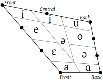 The original vowel quadrilateral, from Jones' articulation. The vowel trapezoid of the modern IPA, and at the top of this article, is a simplified rendition of this diagram. The bullets are the cardinal vowel points. (A parallel diagram covers the front and central rounded and back unrounded vowels.) The cells indicate the ranges of articulation that could reasonably be transcribed with those cardinal vowel letters, [i, e, e, a, a, o, o, u, i], and non-cardinal [@]. If a language distinguishes fewer than these vowel qualities, [e, e] could be merged to <e> , [o, o] to <o> , [a, a] to <a> , etc. If a language distinguishes more, <I>  could be added where the ranges of [i, e, i, @] intersect, <U>  where [u, o, i, @] intersect, and <a>  where [e, o, a, a, @] intersect. Vowel quadrilateral (IPA 1949).png