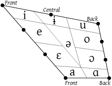 Vowel wikiwand the original vowel quadrilateral from jones articulation the vowel trapezoid of the modern ccuart Images