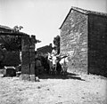 Voz s senom v Topolovcu, vprega par volov z jarmom 1950.jpg