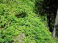 Vylet k Cernemu jezeru Sumava - 9.srpna 2010 17.JPG