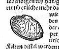 "W.H. Ryff ""Frawen-Rosengarten""; nipple-shield Wellcome L0014453.jpg"
