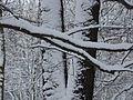 WIELKANOC 13r. Park w bajecznej zimowej szacie ,-)) 29 - panoramio.jpg