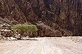 Wadi Gnai 2020-03-08-7.jpg