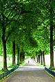 Walk (523026906).jpg
