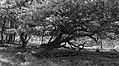 Wandelen over de Planken Wambuis vanuit Mossel 014.jpg