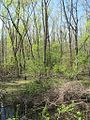 Wapanocca National Wildlife Refuge Crittenden County AR 034.jpg