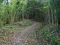 Wapple Way, Sedlow Wood - geograph.org.uk - 1573381.jpg
