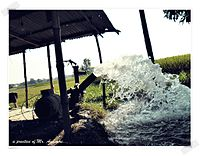 Water Pump watering cultivating fields.JPG