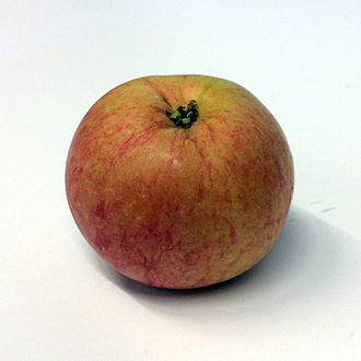 Wealthy (apple) - Apple of the variety Wealthy, photographed in conjunction with the Apple Festival at the Nordic Museum, Stockholm, Sweden in September 2014.
