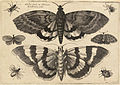 Wenceslas Hollar - Two moths and six insects (State 1).jpg