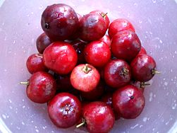 West indian cherry.JPG