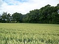 Wheat field near Binley - geograph.org.uk - 883852.jpg