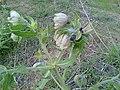 Wild flower8.jpg