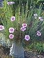 Wildflowers at Alogny - panoramio (1).jpg